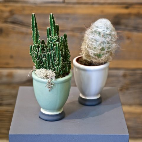 Single Cactus in Ceramic Small