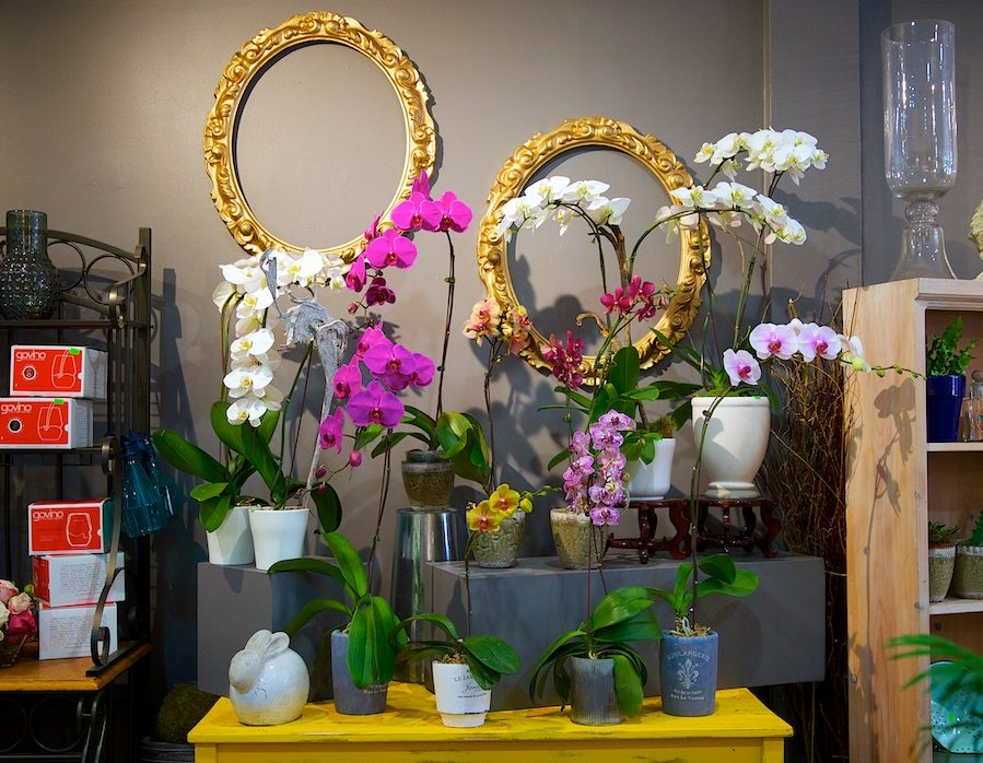Percy Waters Orchids