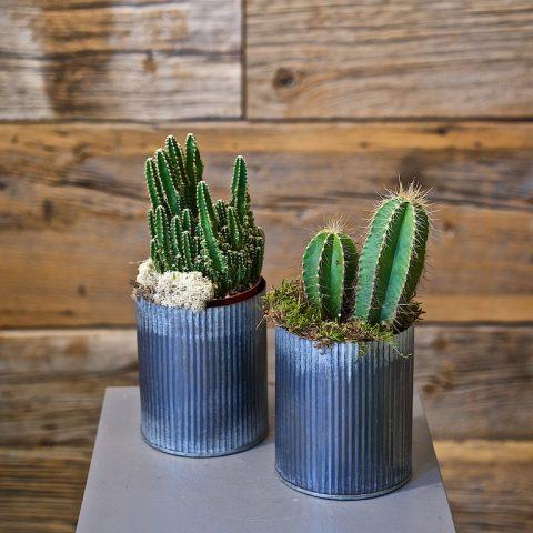 Cactus in Metal