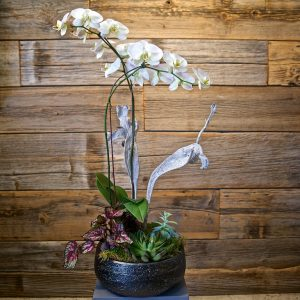 Large Orchid with Succulents