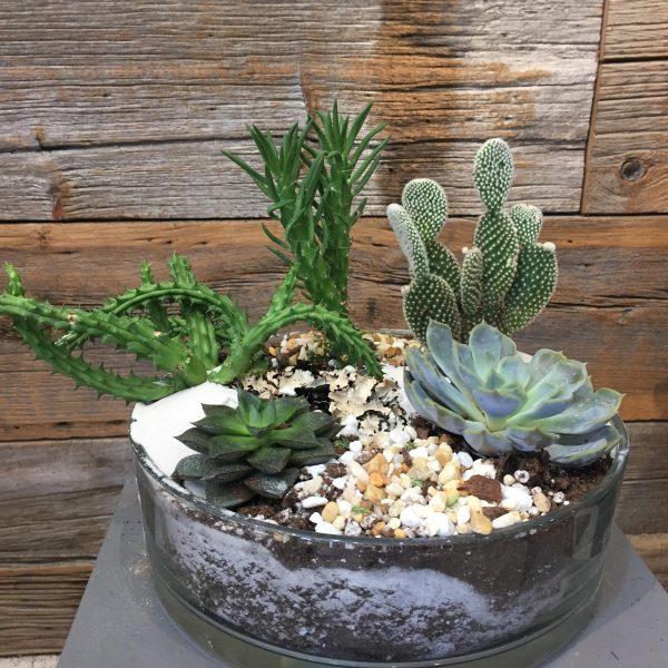 Cactus Terrarium Planter