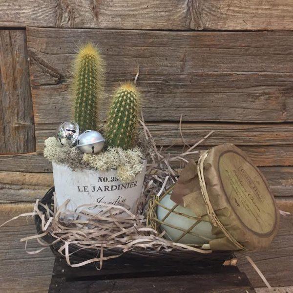 Cactus Gift Basket