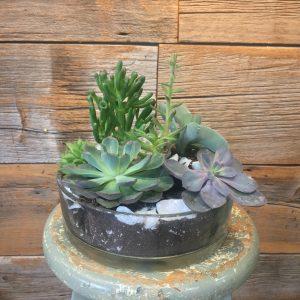 Large Arrangement of Succulents