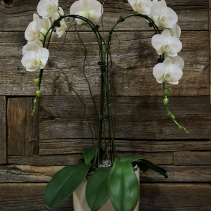 Cascading Double Orchid Planter