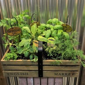 Large Mixed Herb Garden