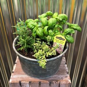 Medium Mixed Herb Planter