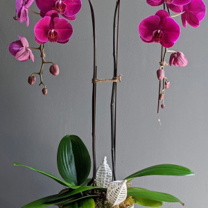 Elegant Phalaenopsis Orchid Arrangement