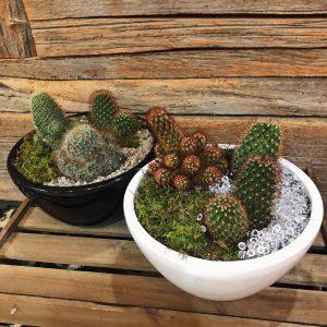 Mixed Cactus Arrangement