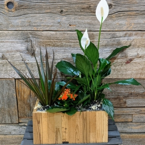 Large Blooming Garden Arrangement