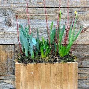 Medium Spring Bulb Planter