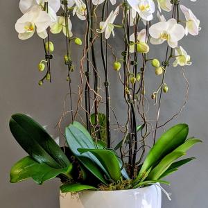 Stunning Phalaenopsis Orchid Planter