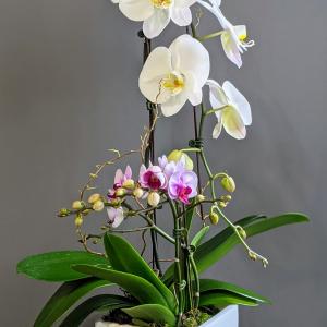 Beautiful Phalaenopsis Orchid Planter